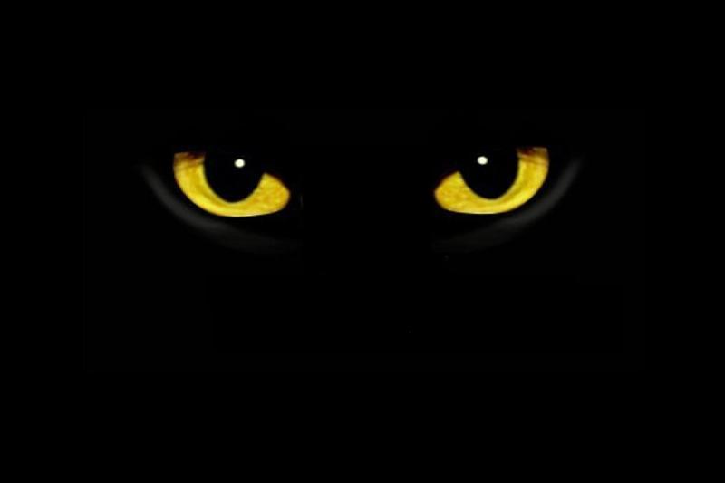 Konkurz do muzikálu A. L. Webbera CATS aneb Mačky po prvý krát na Slovensku!
